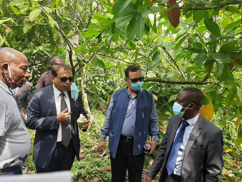 Illegal mining biggest threat to cocoa industry - CRIG boss
