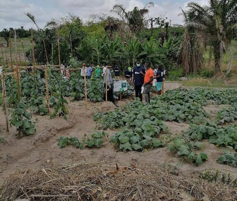 Give us 'galamsey' pumping machines - Farmers appeal